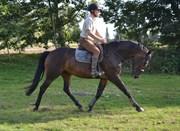 Hest til salg - Passion