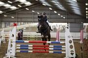 Hest til salg - LINTON F