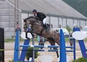 Hest til salg - FASSINI