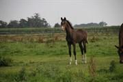 Hest til salg - PINK HORSE ALCATRAZ