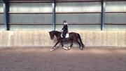 Hest til salg - Hest