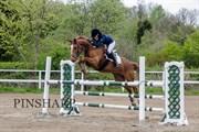 Hest til salg - STRAVINSKY HEART CAMARE