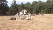 Hest til salg - GAVIANO