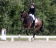 Hest til salg - WINSTON L