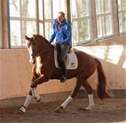 Hest til salg - Fürst Grande