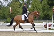 Hest til salg - TIFFANI