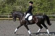 Hest til salg - CASIA
