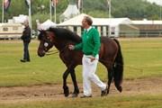 Hest til salg - KILPATRICK BOY