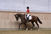 Hest til salg - SYDNEY C