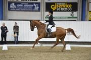 Hest til salg - Oktan