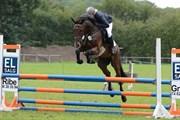 Hest til salg - HIGH LIFE 3