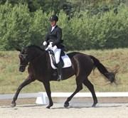 Hest til salg - Bella C