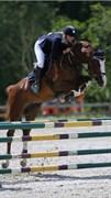 Hest til salg - CODY L