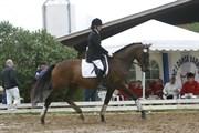 Hest til salg - NANAIA ELTON