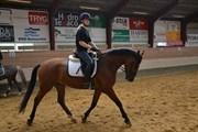 Hest til salg - Dacapo