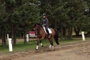 Hest til salg - Lerano