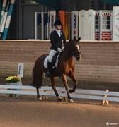 Hest til salg - Nannok