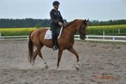 Hest til salg - SABINE KVINDHØJ