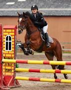 Hest til salg - KIPPURE RANGER