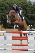 Hest til salg - QUICKSON Z