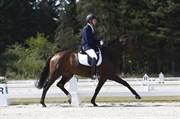 Hest til salg - Zackira