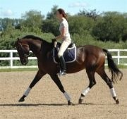 Hest til salg - MINERVA MAXIMA