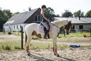 Hest til salg - C'NAYA