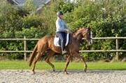 Hest til salg - BAKKELYS ISABELLA