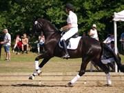 Hest til salg - HOLMMOSENS RIOJA