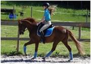 Hest til salg - Power Ramiro