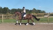Hest til salg - KNUDMARK´S STADEL