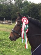 Hest til salg - LULLE
