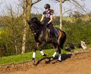 Hest til salg - SKOVBO ARES 4