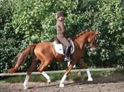 Hest til salg - THORSLUNDS AIR FORCE ONE