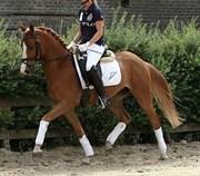 Hest til salg - SKY S