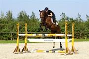 Hest til salg - FELDBORGS CABANERO