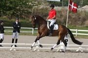 Hest til salg - LILLEVANGS PARI-DONNA