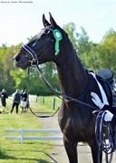 Hest til salg - VILARD'S SUWINA