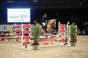 Hest til salg - STALD POPPELS SNUGGI