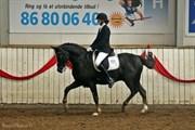 Hest til salg - Houmarks Sofus