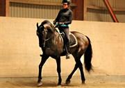 Hest til salg - Luis Rustong Lieuwe