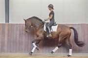 Hest til salg - TRENDY
