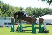Hest til salg - CAREFUL