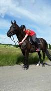 Hest til salg - QUINTUS BRENTEDAL
