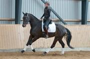 Hest til salg - TANNE