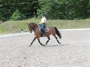 Hest til salg - HEART OF STONE