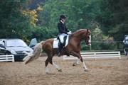 Hest til salg - KILDEGAARDS CYBER (OS)