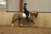 Hest til salg - SKOVLUNDEGÅRDS MENTOS