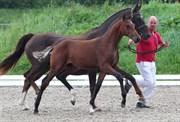 Hest til salg - 403 - SEVERIS JACKSON