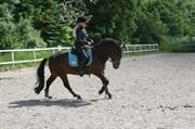 Hest til salg - LUNDEMARKSGÅRDS ARION